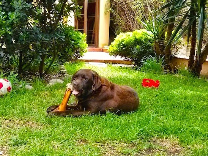 Adopt A Dog in Mexico~Life Lessons by Luna Love