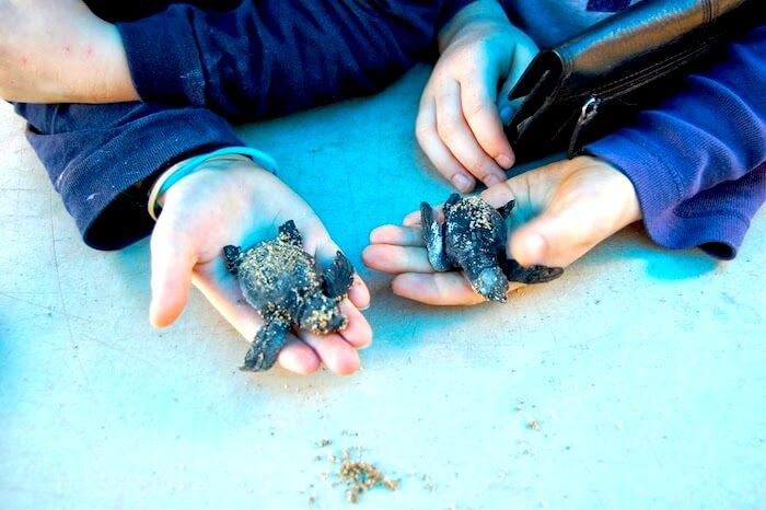 M & L Holding Turtles San Pancho 2012