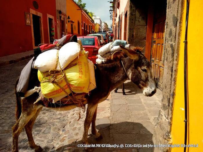Burros in San Miguel de Allende