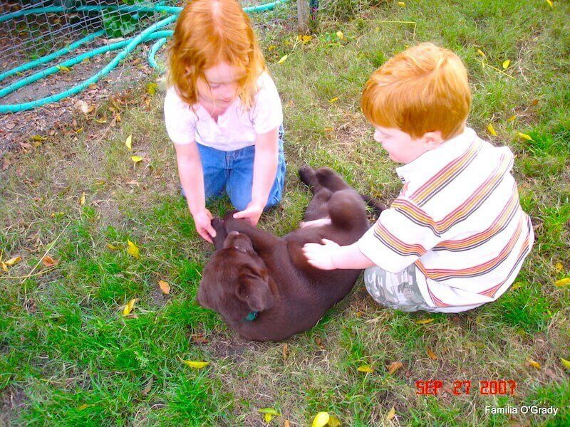 Two kids playing with puppy